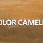 Significado del color Camello / Camel