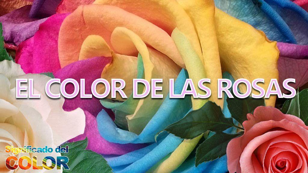 Significado Del Color De Las Rosas Qué Representa Y Simboliza
