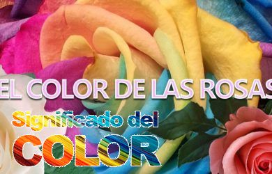 Color de las rosas