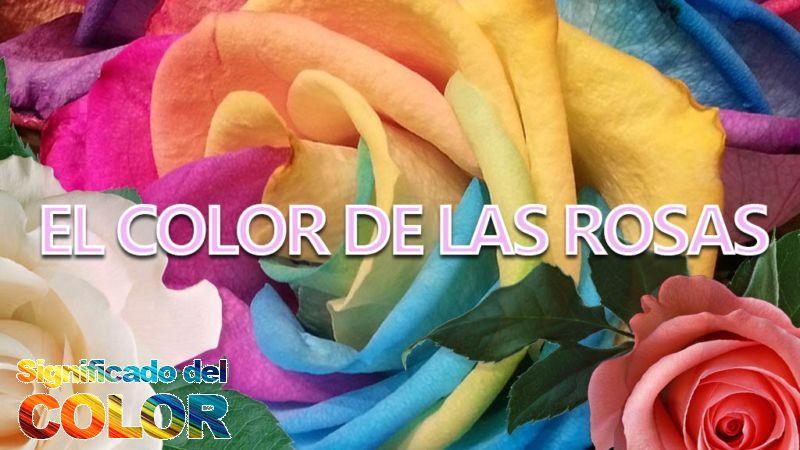 Color de las rosas