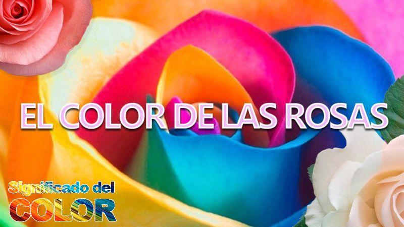 qué significan los colores de las rosas